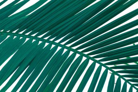 Close up palm tree leaf view. Tropical background. Foto de archivo