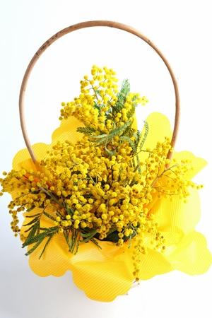 mimosa sul bianco Archivio Fotografico