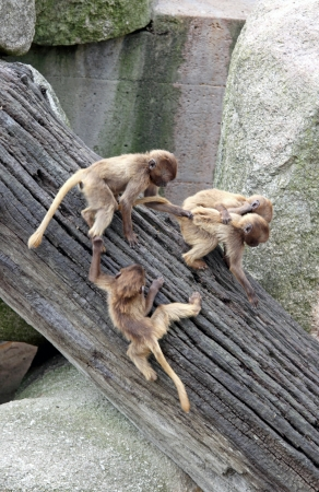 monkeys photo