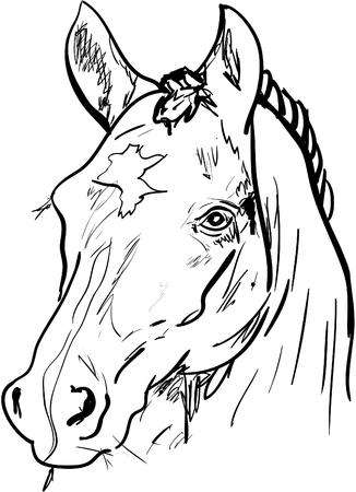 animals outline: horse
