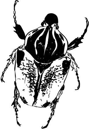 beetle: beetle Illustration