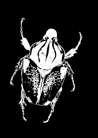 macro nature: beetle Illustration