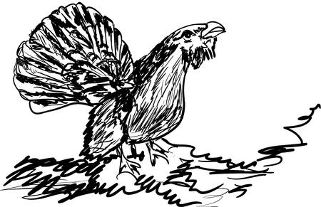 grouse: wood grouse Illustration