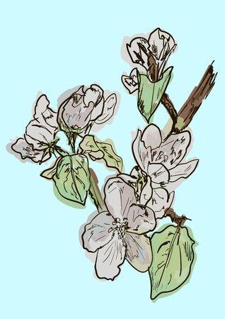 pistil: apple tree Illustration