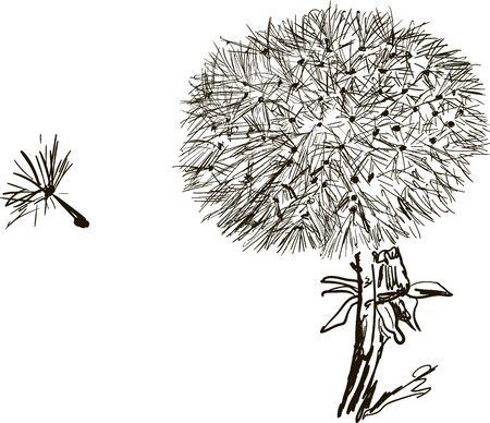 fragility: Dandelion