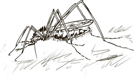 gnat: komar