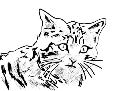 Cat Stock fotó - 119459449