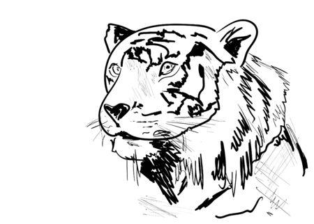 head of a tiger Illusztráció
