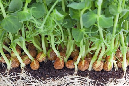 resh vegetables in the garden Stock fotó - 137920998
