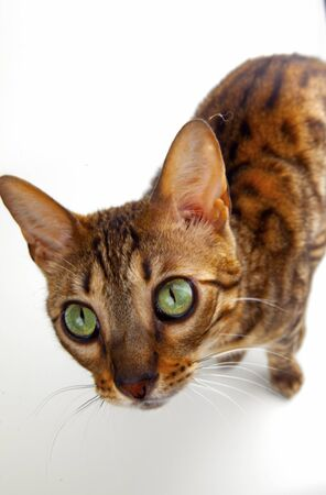 cat with green eyes on white background Stock fotó - 137921005