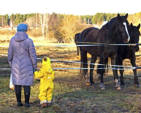 grandmother and girl with a horse