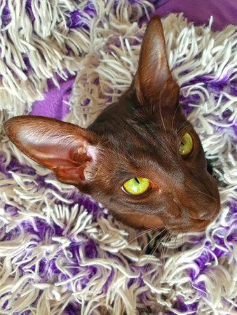 a portrait of a cat