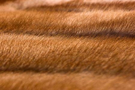 nerts: achtergrond, nertsen pels