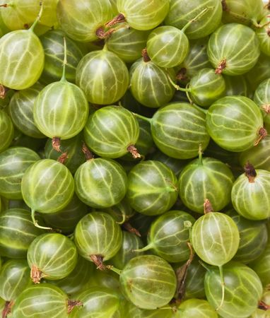 gobble: Gooseberries background