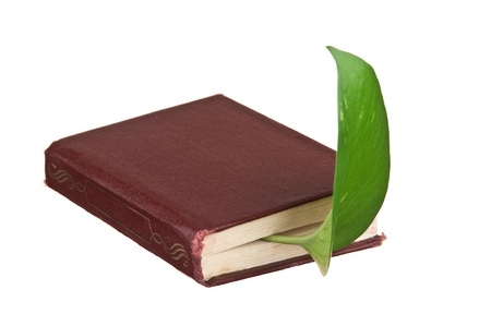 green leaf bookmark in a book isolated on white background photo