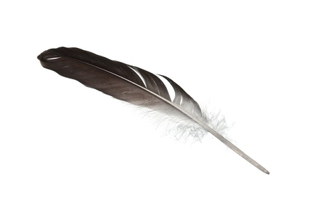 feather pen: feather quill isolated on white background