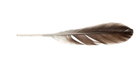 feather quill isolated on white background photo
