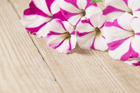 flowers on a wooden background photo