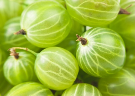 gooseberry: gooseberry macro Stock Photo