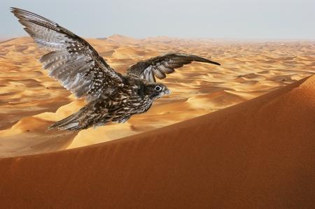 valk stijgende over zandduinen in de Arabische woestijn bij zonsondergang