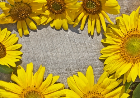 frame of sunflowers on a wooden texture photo
