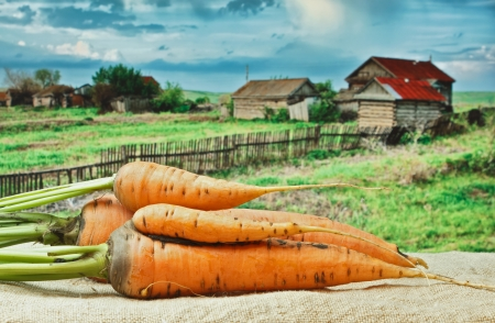 carrots on the background of rural areas photo