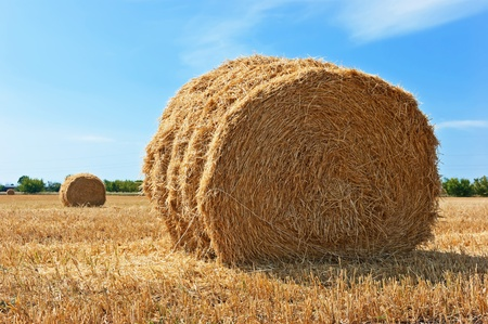On the sloping field of wheat is a big stack straw