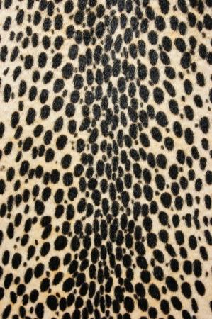 faux: Faux leopardo pelliccia texture di sfondo