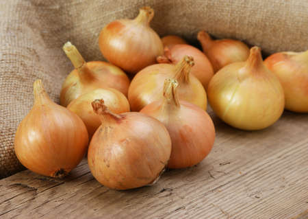 onions on a wooden board Stock Photo - 17167040
