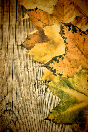 autumn maple leaves on old wooden board photo