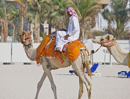 bedouin riding a camel on the beach in Dubai