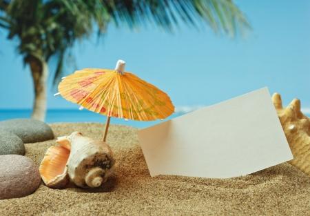 sandy beach: sandy beach on the tropical coast