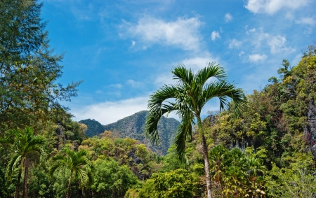 Tropical landscape in Phuket Thailand photo