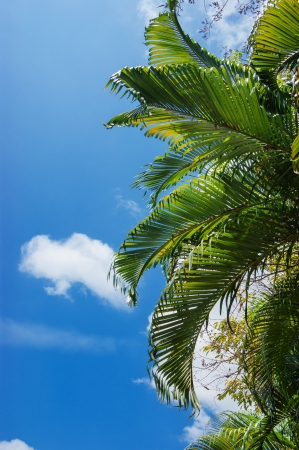 the bigger picture: palm in the sky