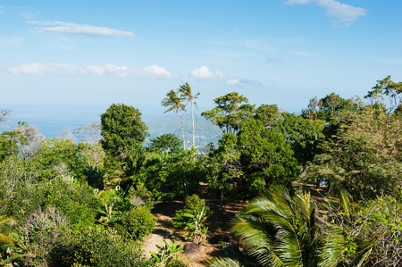 thickets: panoramic view from the hill Big Buddha in Phuket Thailand