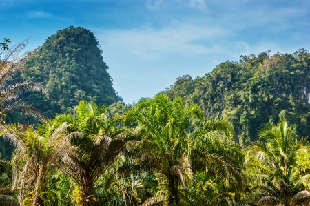 thickets: Tropical landscape in Phuket Thailand