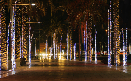palm alley with illuminated at night in Dubai photo