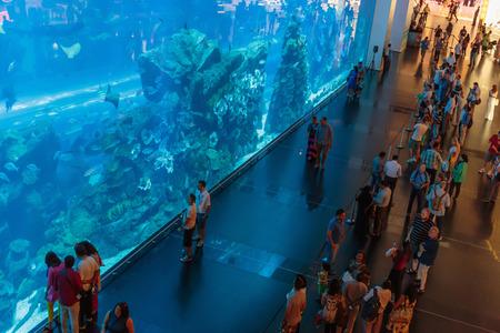 DUBAI, UAE - NOVEMBER 9: View of Dubai Aquarium inside Dubai Mall on November 9, 2013 in Dubai, UAE. The Aquarium has the longest plexi glass tunnel in the world.