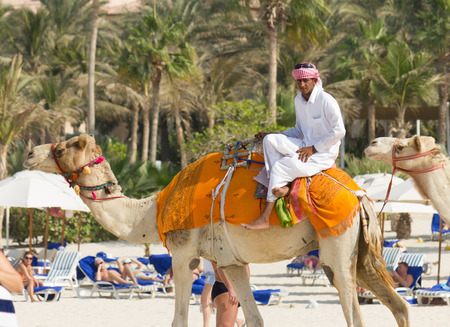 DUBAI, UAE - NOVEMBER 16, 2012  Arab man and camel on Jumeirah Beach in Dubai at the Burj Al Arab background   Dubai was the fastest developing city in the world between 2002 and 2008