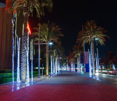 palm alley with illuminated at night in Dubai