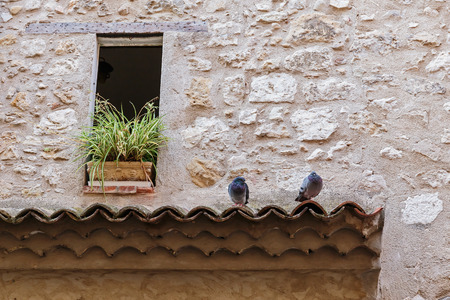 roof tile: pigeons on the roof tile Stock Photo