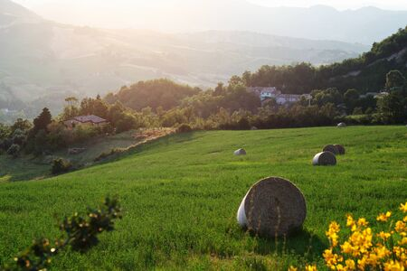 the tuscany: Italian countryside landscape in Tuscany