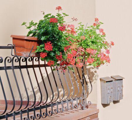 Flowers in pots on the balcony
