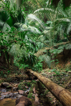 south east: tropical jungles of South East Asia