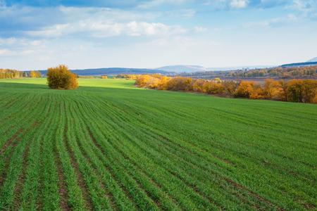 agriculture: Los campos agr�colas y prados en Europa