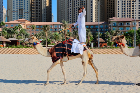 DUBAI, UAE - NOVEMBER 11, 2013: High rise buildings and man riding a camel on the beach