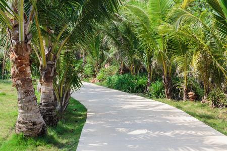 tropics: The road between palm trees in the tropics