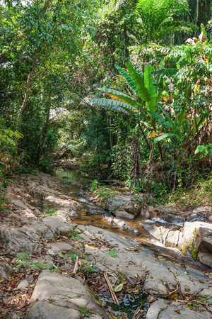 east asia: tropical jungles of South East Asia