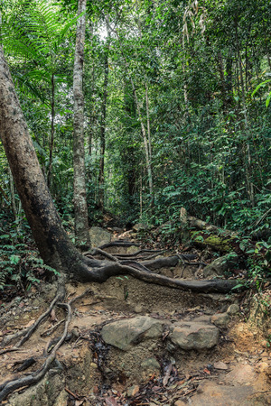 south east asia: The path in the tropical jungles of South East Asia