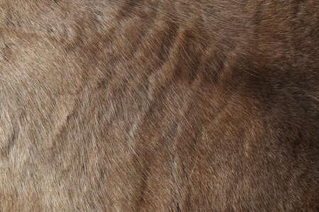 pelage: Reindeer fur, close up background